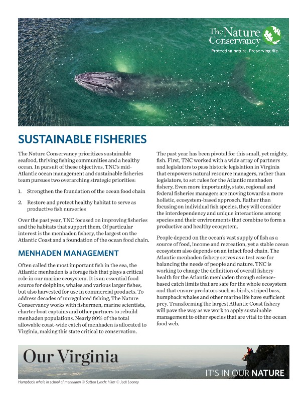 TNC prioritizes sustainable seafood, thriving fishing communities and a healthy ocean.